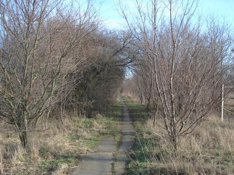 Der Plaumenweg im Januar